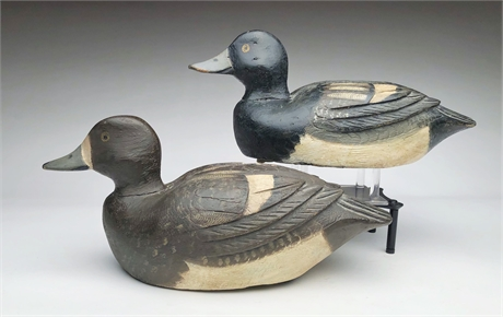 Pair of bluebills attributed to Alcide Leroux, Quebec, 2nd quarter 20th century.