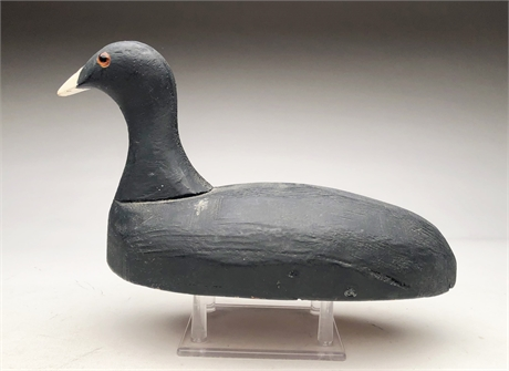 Coot, Francis Uzee, New Orleans, Louisiana.